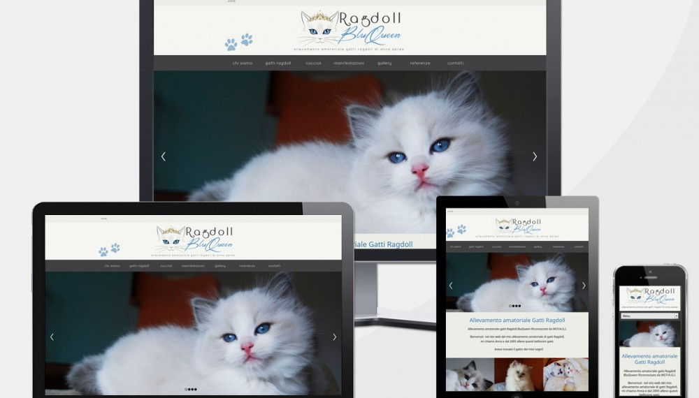 Creazione Sito Web Allevamento Ragdoll